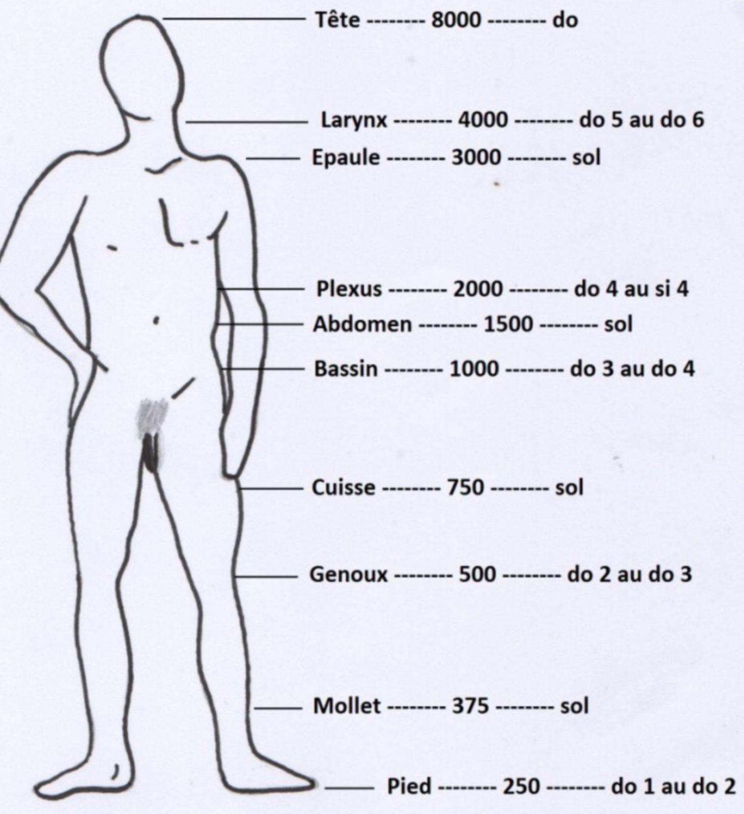 Correspondance fréquences sonores et parties du corps